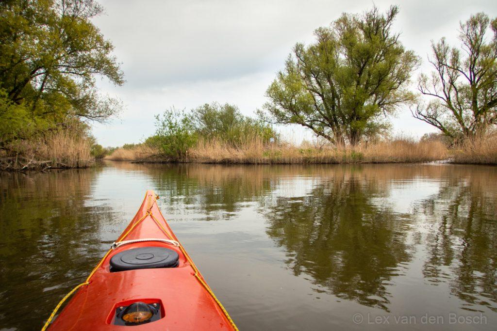 Het verstilde water vanuit de kajak in de Biesbosch