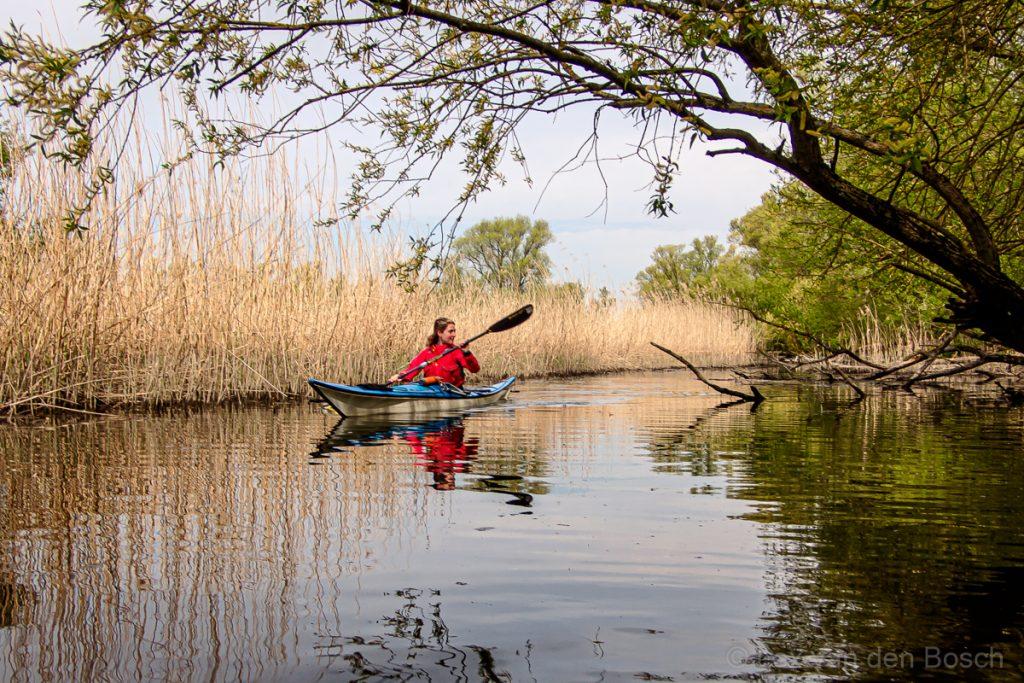 In het voorjaar met de kajak door de Biesbosch