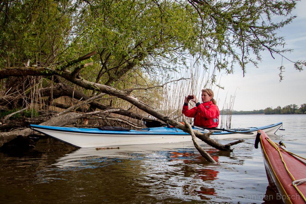Fotograferen vanuit de kajak in de Biesbosch met een Olympus Tough outdoorcamera