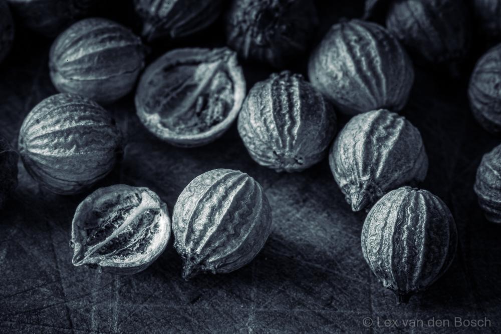 macro foto van korianderzaad