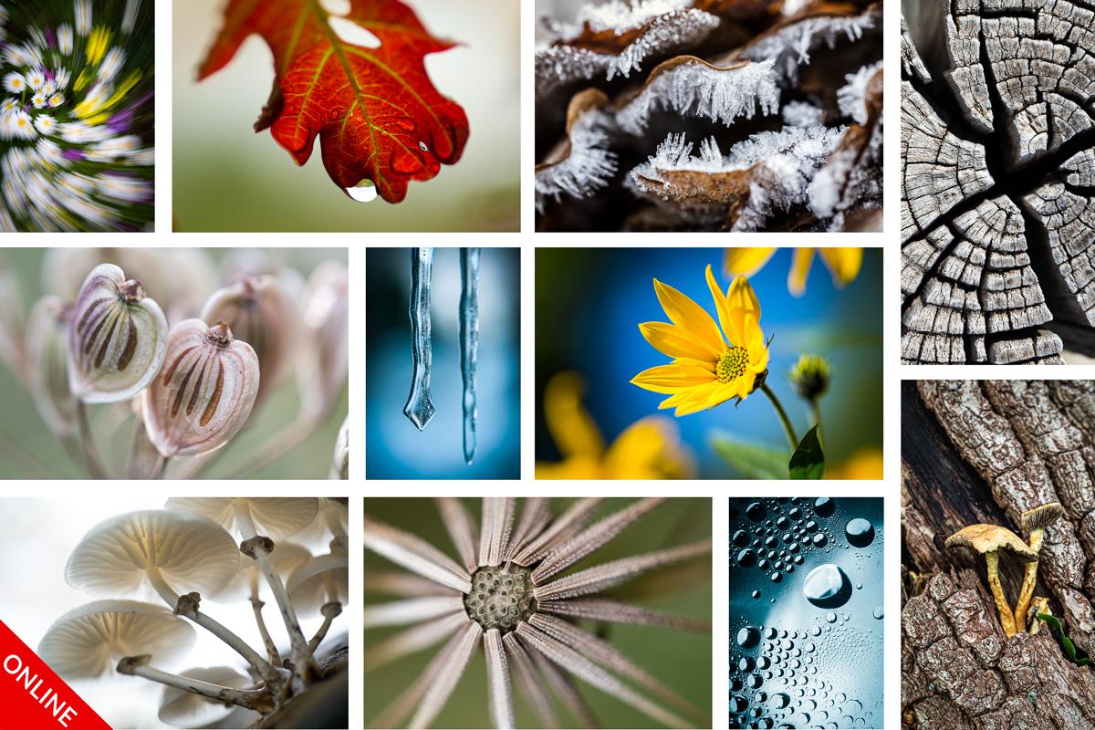 Online cursus macrofotografie winter-editie BASIS (6 ZOOM-avonden)