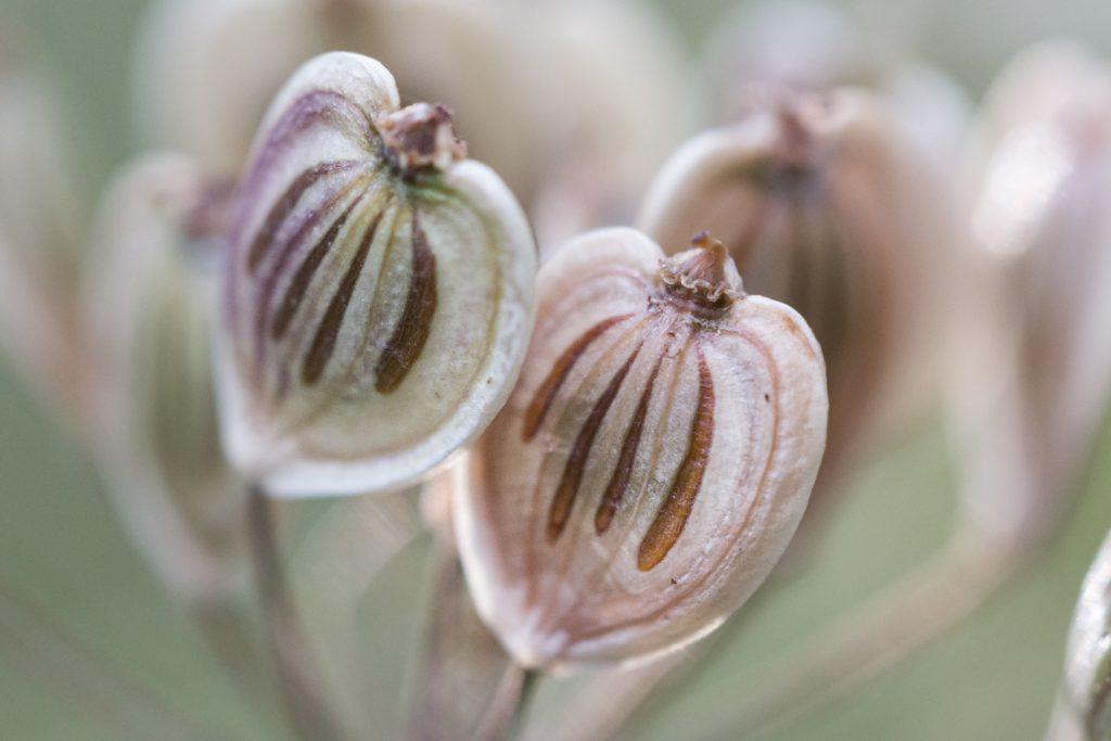 takken met zaden in een droogboeket kun je in de winter gebruiken voor macrofotografie