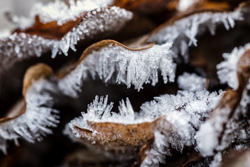 acrofoto met ijskristallen op afgevallen eikenbladeren