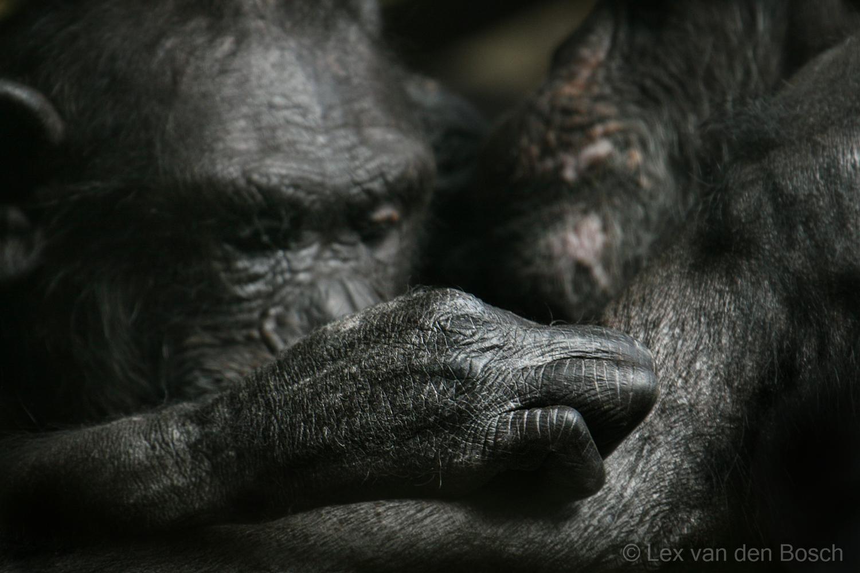 Het geheim van aansprekende dierenfoto's: fotoworkshop in de Amsterdamse dierentuin
