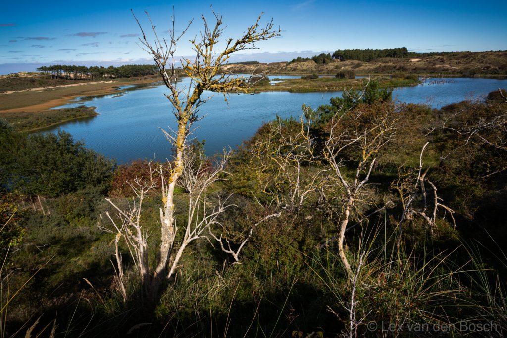 Uitzicht over het water van het Vogelmeer in de Kennemerduinen