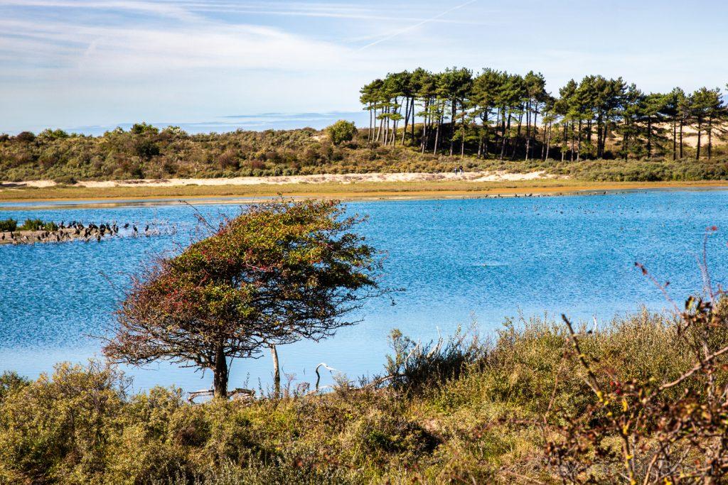 Een alleenstaande meidoorn steekt af tegen het felblauwe water van het Vogelmeer in de Kennemerduinen