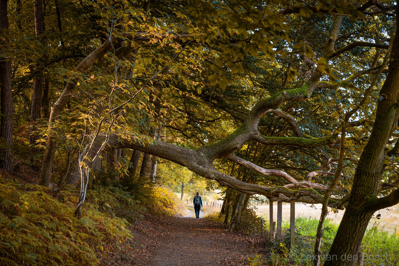 Langs berg en dal: weekendfotoreis in herfstkleuren