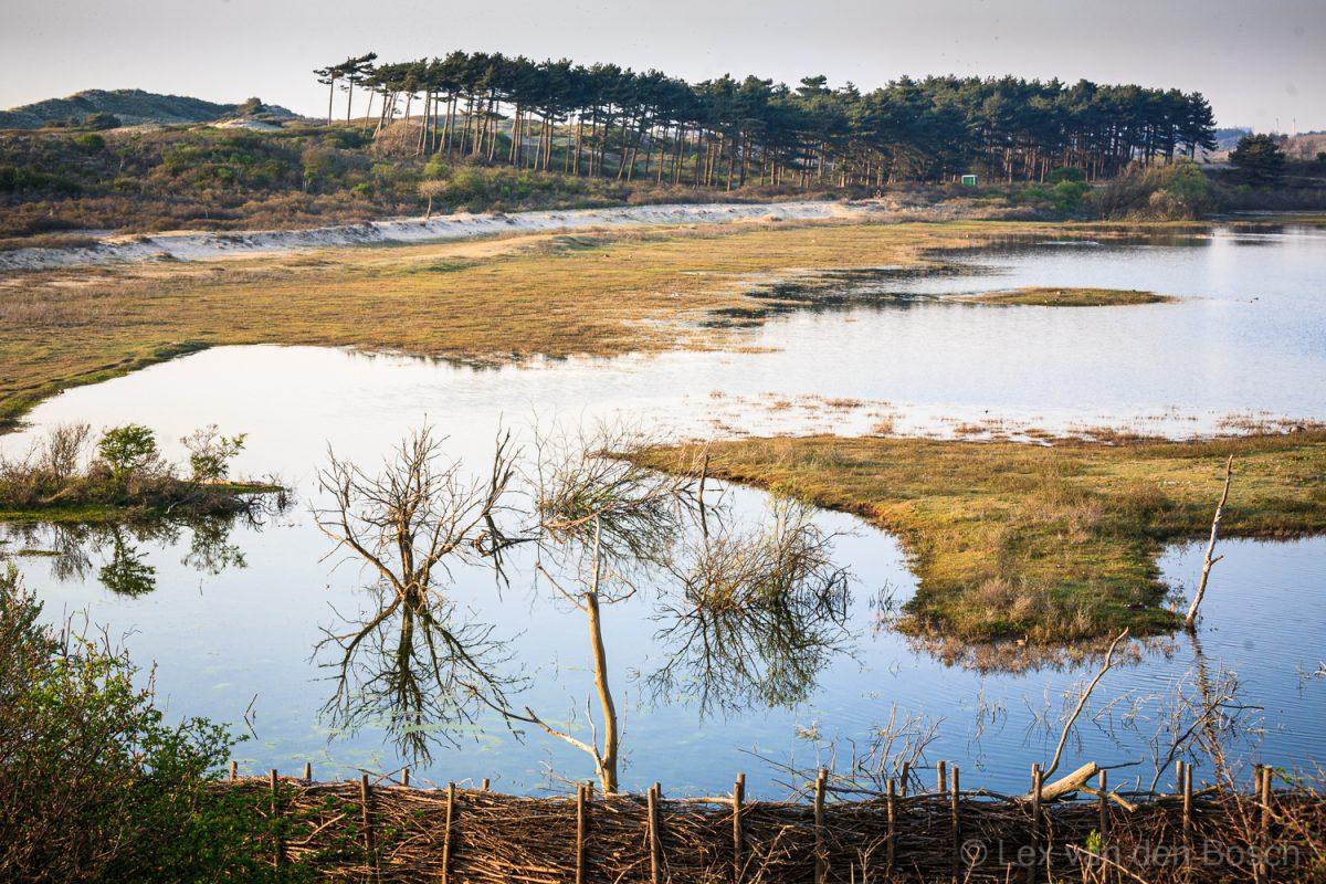 Uitzicht op het Vogelmeer in Nationaal Park De Kennemerduinen