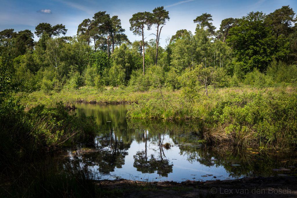 spiegelende bosrand in een van de Oisterwijkse vennen tijdens een fotowadenling