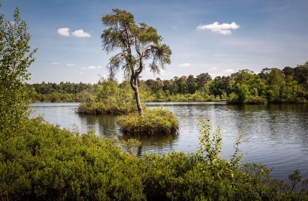 Den op mini-eilandje in het Voorste Goorven nabij Oisterwijk