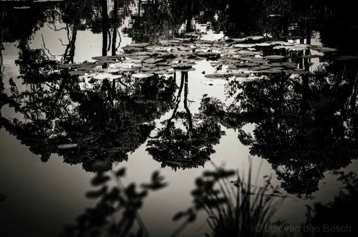 Bomen spiegelen in het verstilde wateroppervlak van een Brabants ven bij Oisterwijk